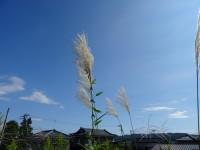 akitakasi